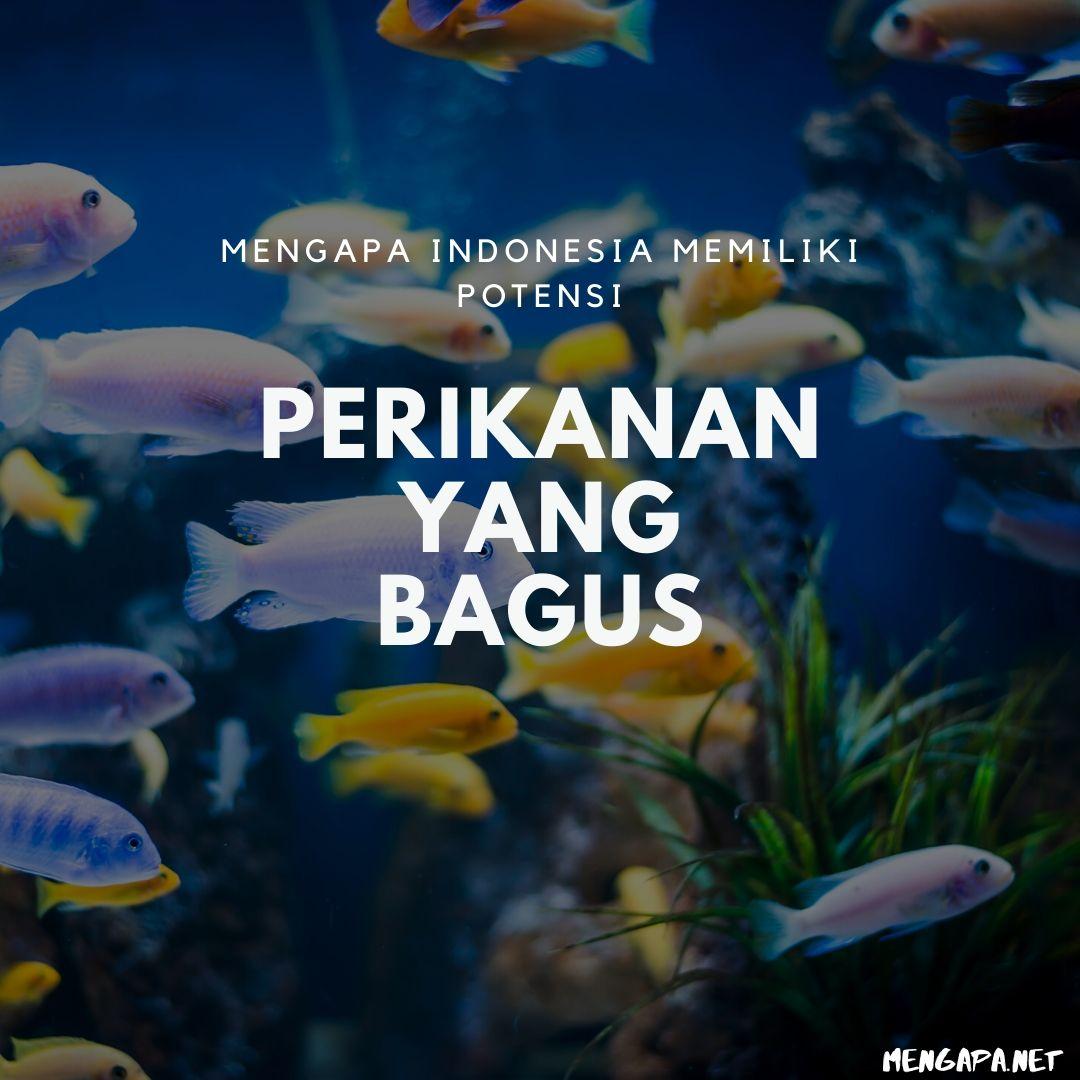 Mengapa Indonesia Memiliki Potensi Perikanan Yang Bagus
